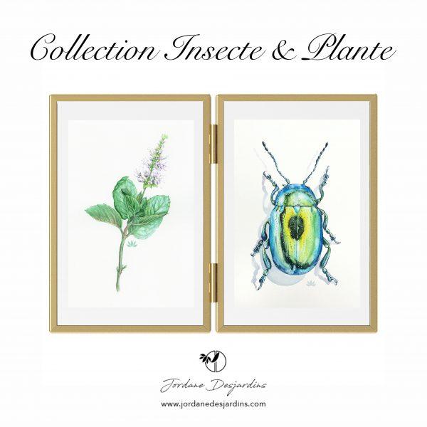 Cadre double doré - Chrysomèle & menthe verte - Aquarelle de Jordane Desjardins