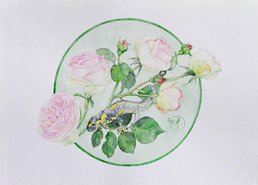 Salamandre aux roses