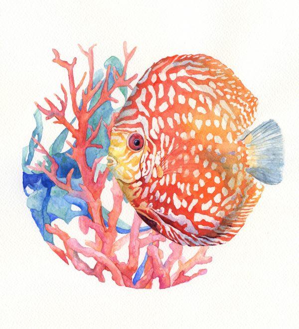 Diskus corail - Aquarelle originale Jordane Desjardins
