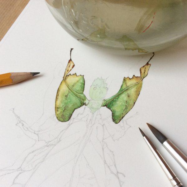 Cadre double Phyllium & chêne - Aquarelle de Jordane Desjardins