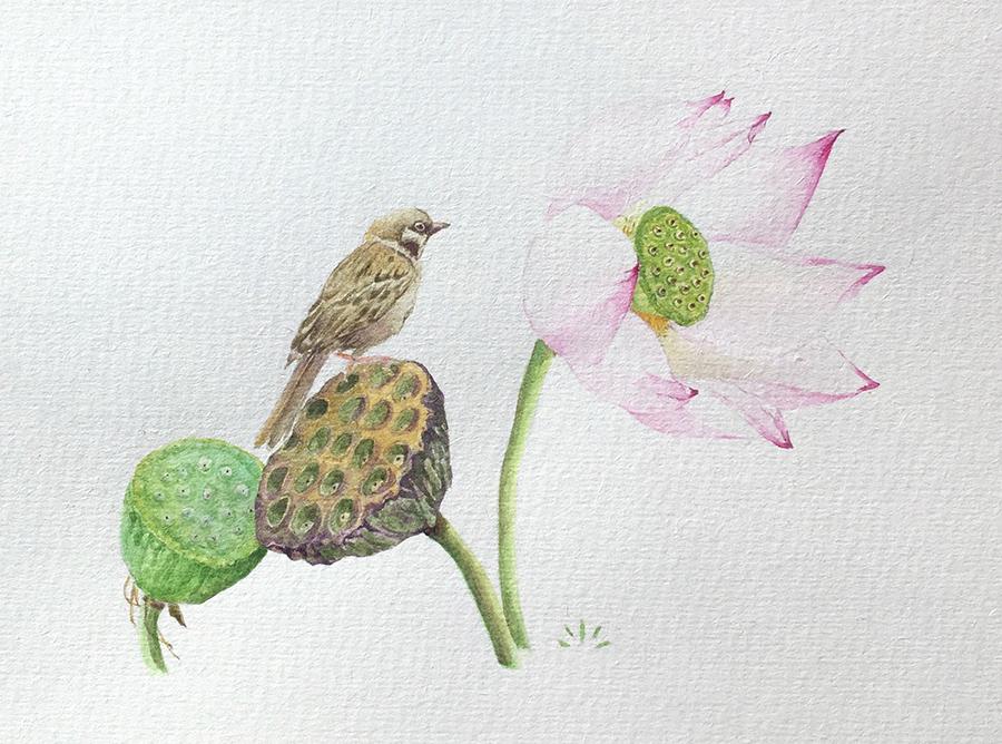 moineau et lotus