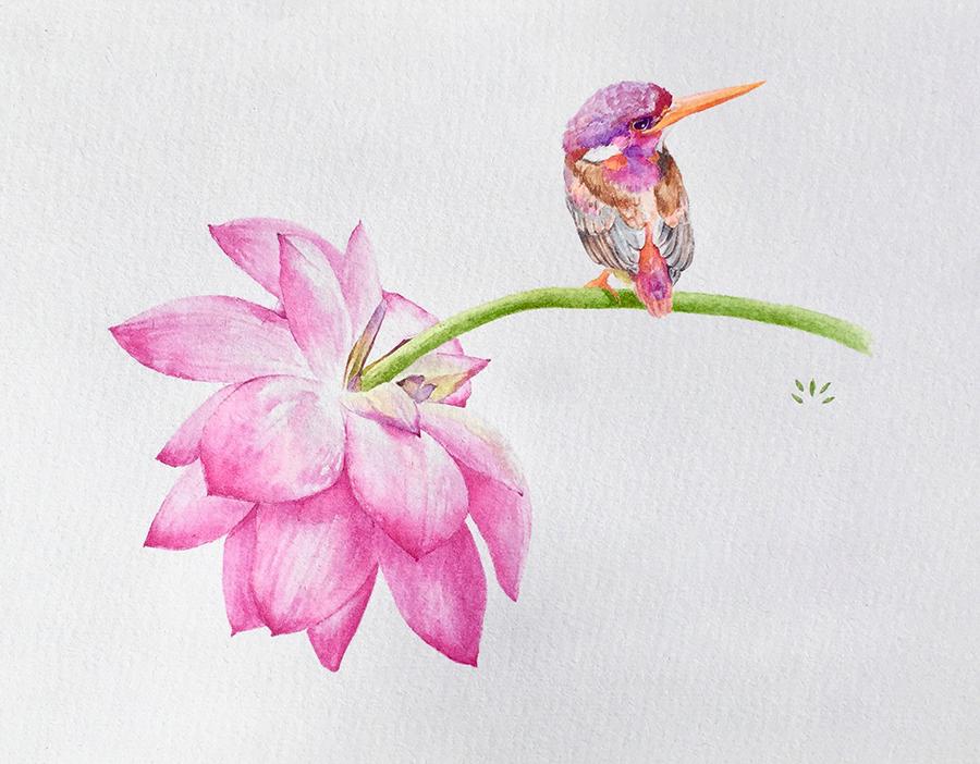 lotus et martin pêcheur