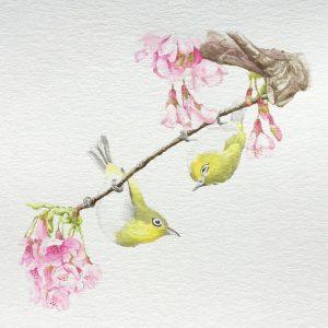 Deux mejiros sur une branche