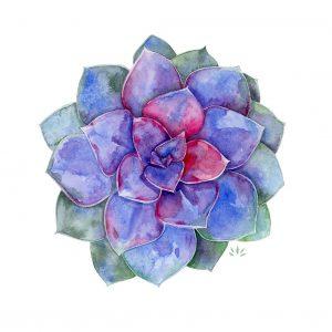 Echeveria - succulent - Aquarelle originale de Jordane Desjardins