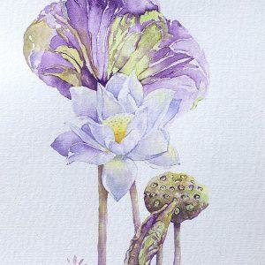 Sen lotus