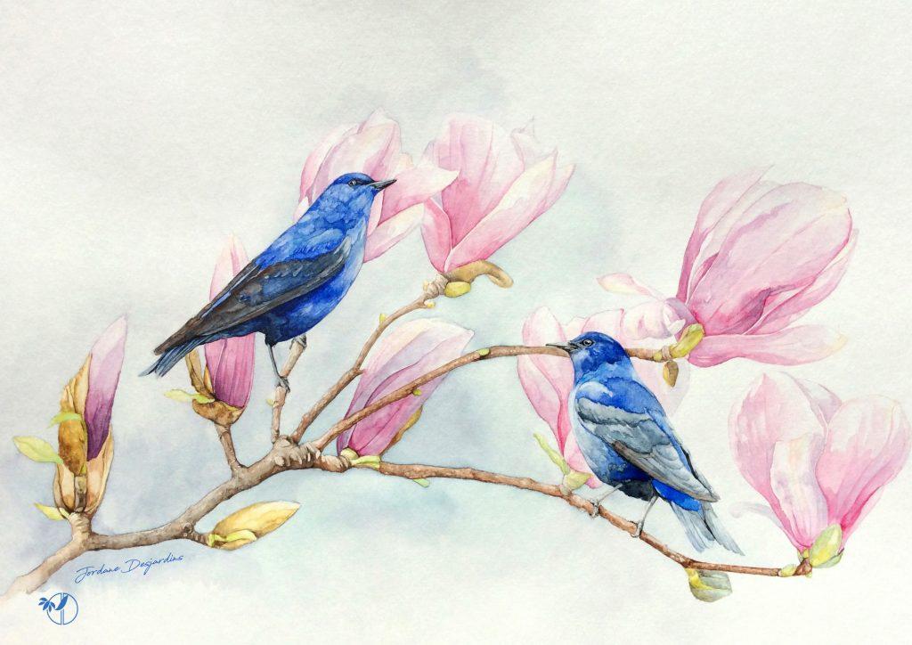Passerins indigo et magnolia - Aquarelle originale par Jordane Desjardins