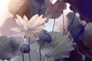 Etude de lotus