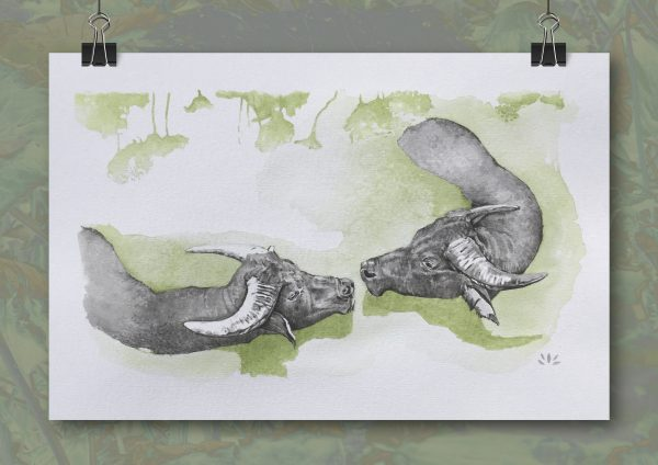 Exquise baignade buffles aquarelle sur papier Jordane Desjardins