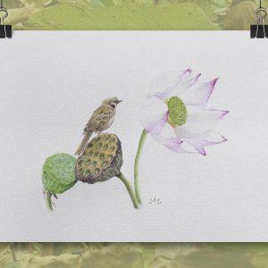 Moineau fleur de lotus aquarelle sur papier Jordane Desjardins