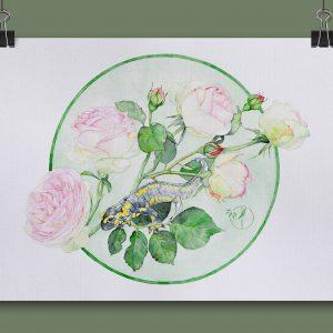 Salamandre roses aquarelle sur papier Jordane Desjardins