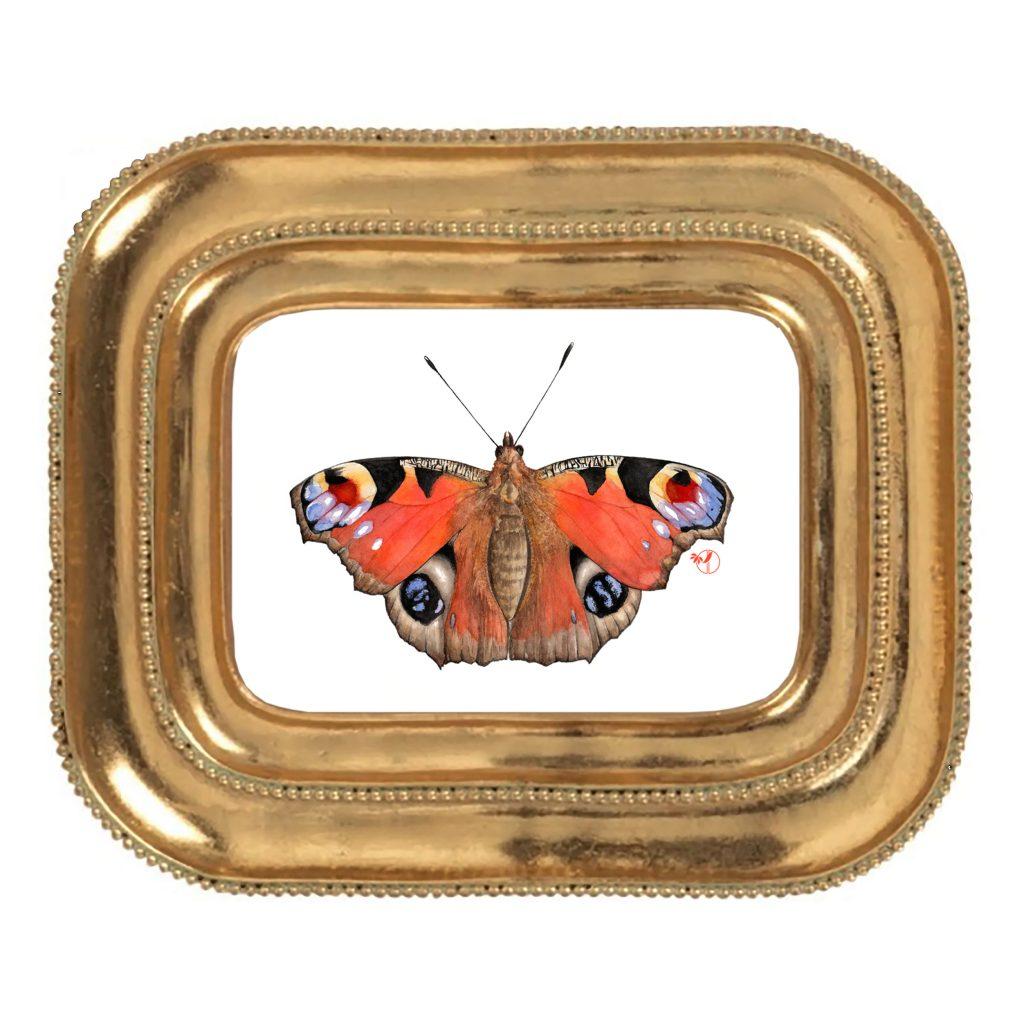 Le paon du jour - Inachis io (Lépidoptère Nymphalidae) - Aquarelle de Jordane Desjardins