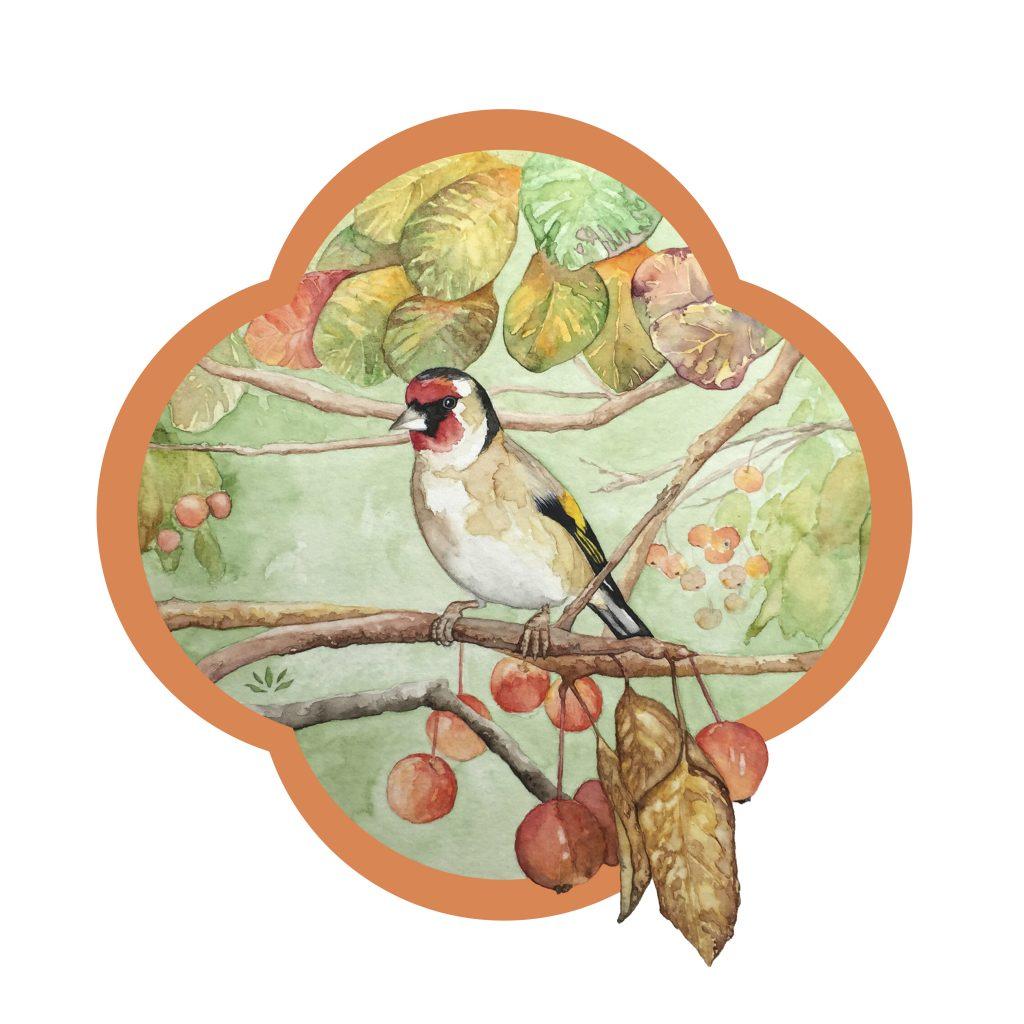 Chardonneret élégant pommier sauvage aquarelle sur papier Jordane Desjardins