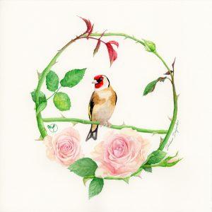 Couronne-rose-chardonneret-Aquarelle Jordane Desjardins