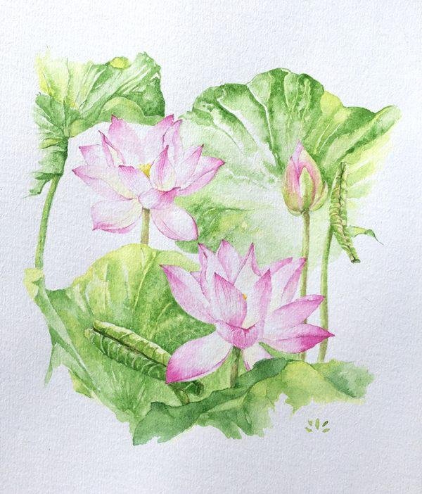 Pleine floraison