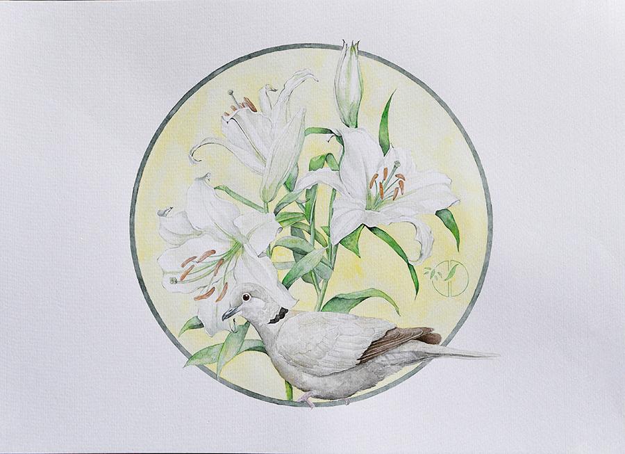 Lys blanc tourterelle aquarelle sur papier Jordane Desjardins
